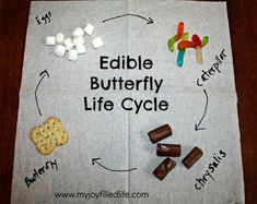 Learn about the butterfly life cycle. | 19 Kitchen Science Experiments You Can Eat