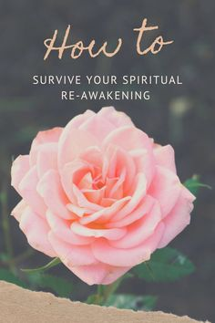 How to survive a spiritual awakening. Navigating a spiritual awakening. Tarot, Meditation Garden, Motivational Quotes, Inspirational Quotes, Wise Quotes, Positive Quotes, Bloom Where You Are Planted, Self Confidence, Spiritual Awakening