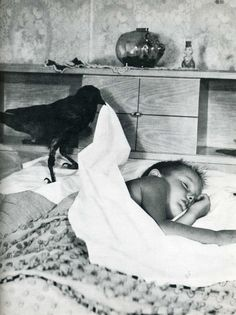 Life magazine - a crow putting a boy to sleep. Life Magazine, The Crow, Black White Photos, Black And White Photography, Photo Black, Vintage Photographs, Vintage Photos, Potnia Theron, Sleeping Boy