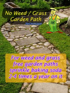 No Weed / Grass Garden Paths....  For weed and grass free, clear garden paths sprinkle baking soda 2-4 times a year on it.