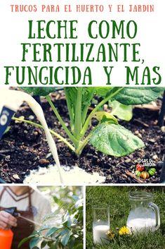 Yellow Hibiscus, Ideas Para Fiestas, Succulents Garden, Planet Earth, Ecology, Bonsai, Gardening Tips, Helpful Hints, Vegetables