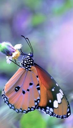 Close up photography of a butterfly. Papillon Butterfly, Butterfly Kisses, Butterfly Flowers, Butterfly Wings, Rainbow Butterfly, Butterfly Painting, Yellow Flowers, Flying Flowers, Butterflies Flying