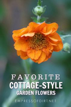 Favorite flowers for creating a charming cottage-style garden. #plantlist #flowergarden