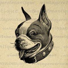 Dog Digital Image Printable Boston Terrier Art Animal Clipart