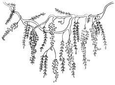 [Wisteria Pattern[6].jpg]