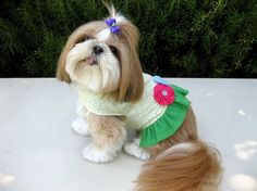 Fashionable pets found on Pinterest - Chicago Shopping