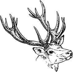 stag head by @papapishu, Source: http://commons.wikimedia.org/wiki/File:Antlers_(PSF).png, on @openclipart