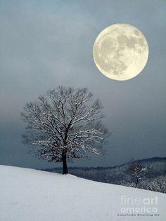 luna, winter moon, tree, snow, natur, full moon, beauti, moonlight, photographi
