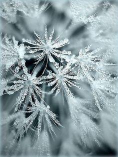 Amazing macro photography. My goal: winter macro photography.