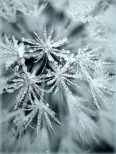 Amazing macro photography. My goal: winter macro photography.