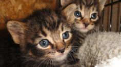 Iowa Dog Rescues Kittens Left to Die.. WARNING: Graphic description/details.
