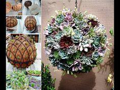 Succulent sphere