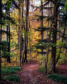 Autumn path (Austria) by Rudi Moerkl on 500px