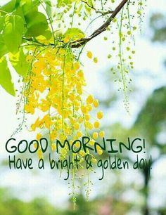 good morning / good morning & good morning quotes & good morning quotes inspirational & good morning quotes for him & good morning wishes & good morning beautiful & good morning images & good morning greetings Good Morning Images Flowers, Good Morning Nature, Good Morning Beautiful Images, Good Morning Photos, Morning Pictures, Beautiful Gif, Happy Morning Quotes, Good Morning Inspirational Quotes, Morning Greetings Quotes