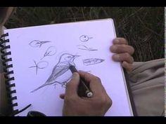 Jack Laws on sketching birds