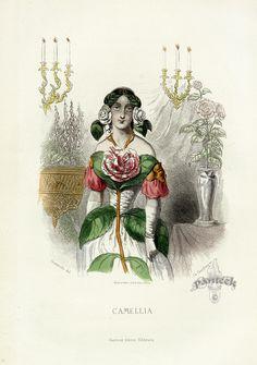 JJ Grandville 'Camellia'