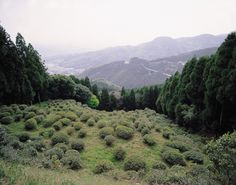Ruins of Ryousenji Temple Eisai Tea Garden Yoshinogari,Saga,Kyushu