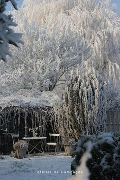 Snow this morning in our garden in Belgium