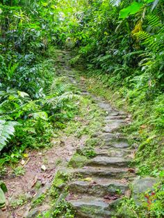 Santa Marta, Sierra Nevada, Country Roads, Outdoor Decor, Lost City, Trekking, Driveways, Rock, Staircases
