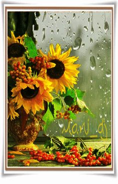 GIF by Mani Ivanov. Discover all images by Mani Ivanov. Pretty Gif, Beautiful Gif, Beautiful Flowers, Flowers Gif, Exotic Flowers, Gifs, Falling Gif, Rain Gif, Rain Wallpapers