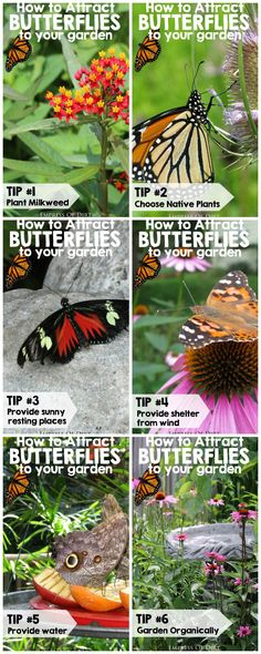 7 Important tips for attracting butterflies to your garden plus ways to help conserve the monarch population. #sponsored