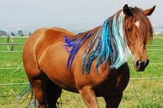 Clip-in mane and tail extensions for horses will add a little color and fun to your pony-lover's ride. Don't forget to take pictures! $5.50 each.