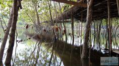 Reste der schwimmenden Märkte - Check more at https://www.miles-around.de/asien/thailand/ayutthaya-willkommen-in-sin-city/,  #Ayutthaya #Flutkatastrophe #Reisebericht #schwimmendeMärkte #Tempel #Thailand #WatMahathat #WatPhraSriSanphet #WatRatBurana