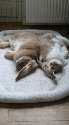 Synchronized bunny flops. from Everything you need to know about bunnies.