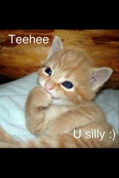 Pretty kitty :3