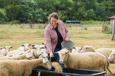 Raising sheep and lambs can be intimidating. Learn the basics here so you can have happy, healthy ewes, rams, and lambs.