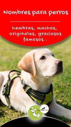 Nombres Para Perros Top 100 Más Bonitos Y Originales Nombres Para Perros Machos Nombres De Perro Hembra Nombres De Perros