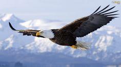Fábula: Águia - Transformação e Renovação