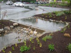 University Of Massachusetts At Amherst Rain Garden: 2010 Landscape Elements, Landscape Architecture, Landscape Design, Architecture Plan, Rain Garden, Water Garden, Sponge City, Recycled Concrete, Water Management