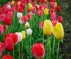 Image result for site:theorganicgardening.com Plants, Inspiration, Image, Biblical Inspiration, Planters, Plant, Planting, Inspirational