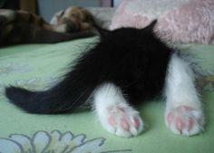( ்́ॢꇴ்̀ॢ)♡ #cat