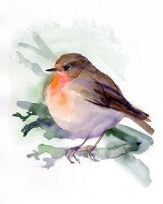 Bird painting, Red Robin Fine Art print from original watercolor, bird-lovers, red, orange, brown colored wall art. $80.00, via Etsy.