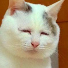 あなたの変顔最高っす . . . #ミロ #猫 #ねこ #ネコ #cat #白猫 #whitecat  #mix #可愛い #cute #動物 #animal #ペット #pet #愛猫 #多頭飼い #ねこ部  #しろねこ #多頭飼い #love #しろねこ部 #変顔 #猫の変顔