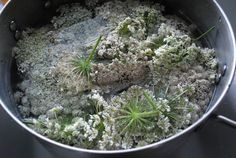 Dyeing with Queen Anne's Lace Flowers on Brambleberries in the Rain at http://brambleberriesintherain.com/page/6/