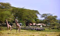 Hatari Lodge   Safari Tansania