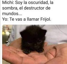 Funny Spanish Memes, Spanish Humor, Funny Animals, Cute Animals, Best Memes, Funny Images, Grumpy Cat, Anime, Random