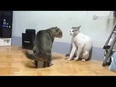 Funny Cats Animal Part4 - http://showatchall.com/animal/funny-cats-animal-part4/