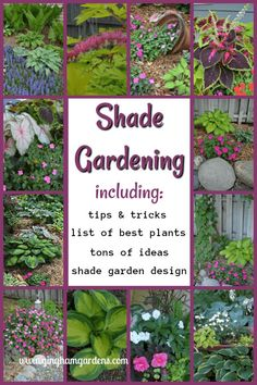 Made In The Shade Gardens (Beautiful Ideas for Your Shade Ga.- Made In The Shade Gardens (Beautiful Ideas for Your Shade Garden) – Gingham Gardens Shade Gardening – Tips & Tricks - Shade Garden Plants, Garden Shrubs, Garden Landscaping, Landscaping Ideas, Shade Landscaping, Garden Paths, Garden Bed, Veg Garden, Best Shade Plants