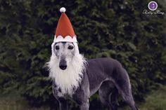 Greyhound Santa