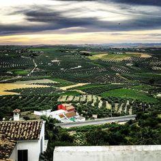 Vista de los #campos de #montilla  al #atardecer desde  el #colegiosalesiano