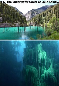 14.  The underwater forest of Lake Kaindy.