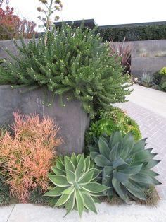 Succulents, drought resistant landscaping