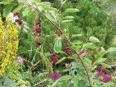 Muchovníky Garden, Plants, Garten, Lawn And Garden, Gardens, Plant, Gardening, Outdoor, Yard