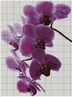 Orchidee Viola - Purple Orchids