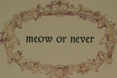 It's meow or never! (The link says it's not there anymore, but the picture is still great.)