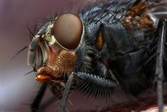 Another beautiful macro shot by the very talented Ondrej Pakan.